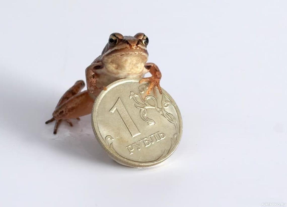 Картинки смешные жаба давит