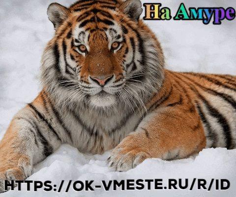 https://ok-vmeste.ru/<br />💢💢💢<br />Ok vmeste - Дальневосточная соц сеть На Амуре - место для знакомств и общения с друзьями. Посты, тогеты, фото и статьи. Участие в группах, а так же создание собственных сообществ.