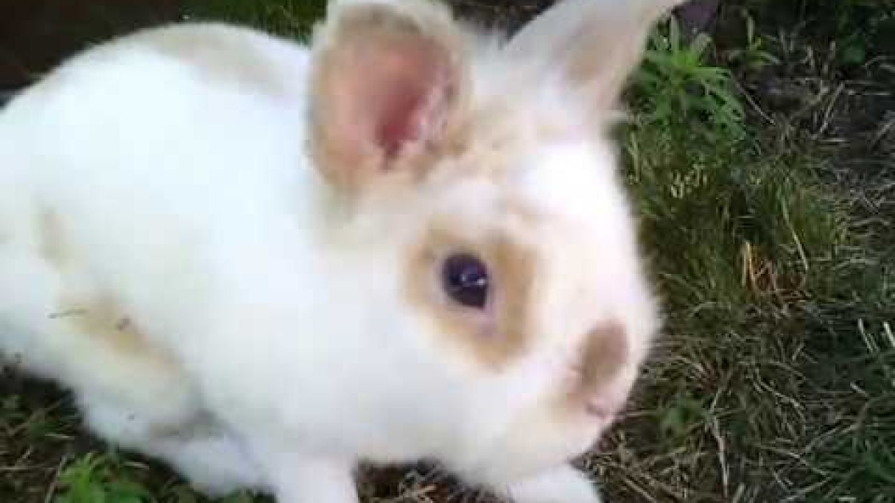 Кролик Боня