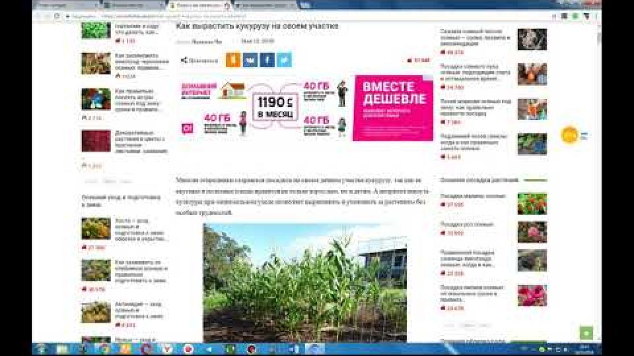 datafee - Платит за ваши поисковые запросы!!!